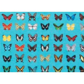 composition murale \'papillons\'
